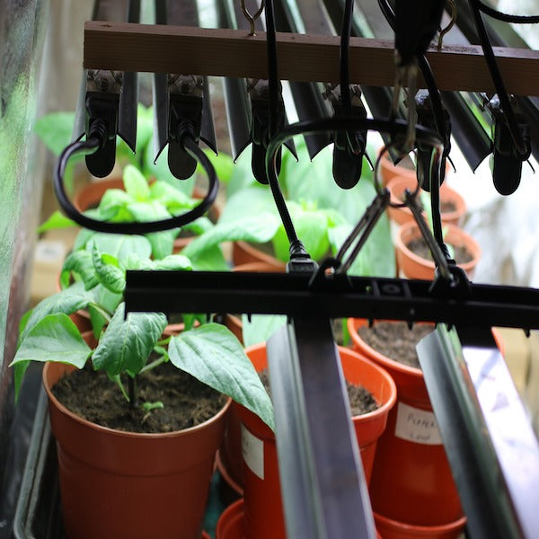 What You Need to Know About Grow Lights