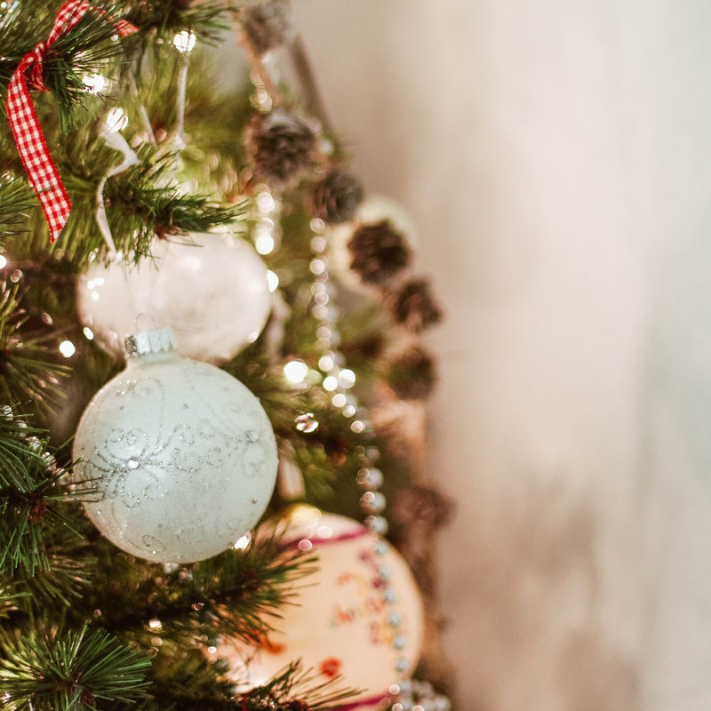 6 Clever Ways to Reuse Your Christmas Tree in the Garden