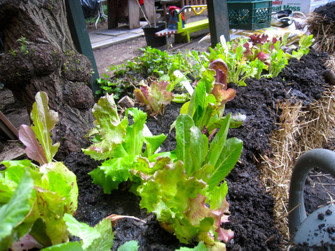 What vegetables can you grow in a straw bale garden?