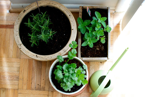 Containers for Growing Herbs