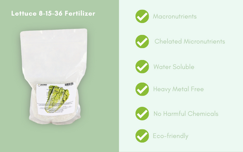 Lettuce and Leafy Greens 8-15-36 Fertilizer Water Soluble