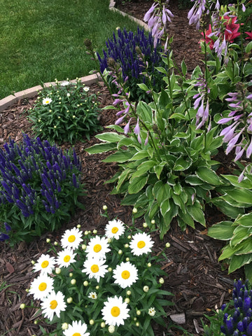 Home flower garden with white daisies and purple flowers