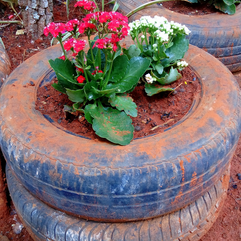 Red and white flowers in a tire planter