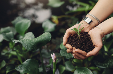 Person holding small plant in hands