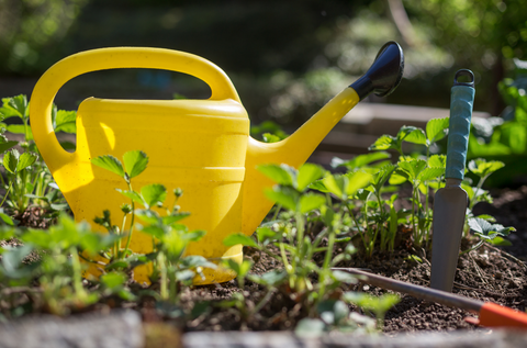 Yellow watering can in a garden bed