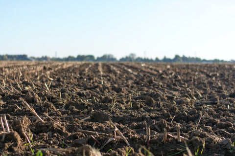 Healthy soil for seeds