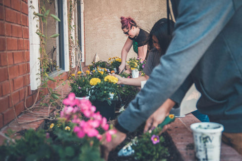 Gardening with others