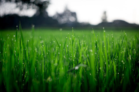 What are symptoms of a sick lawn?