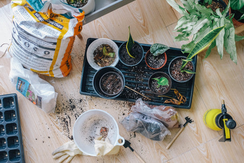 supplies for indoor garden