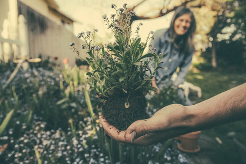 Person holding plant in garden