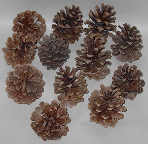 Pine Cones - Dried & Baked - All Natural!