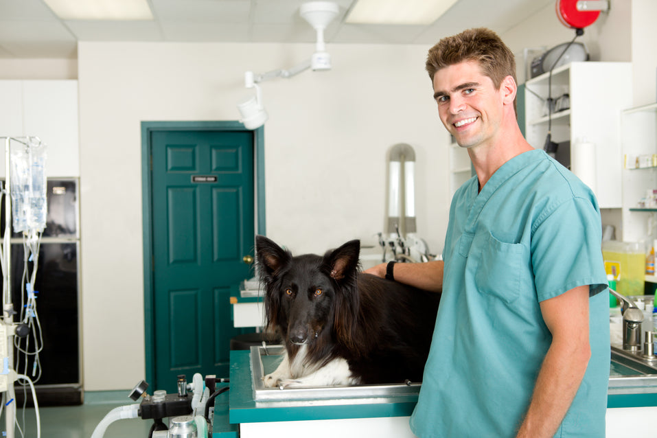 ACL surgery for dogs