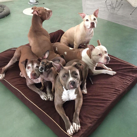 Bullybeds com | Extra Large Dog Beds
