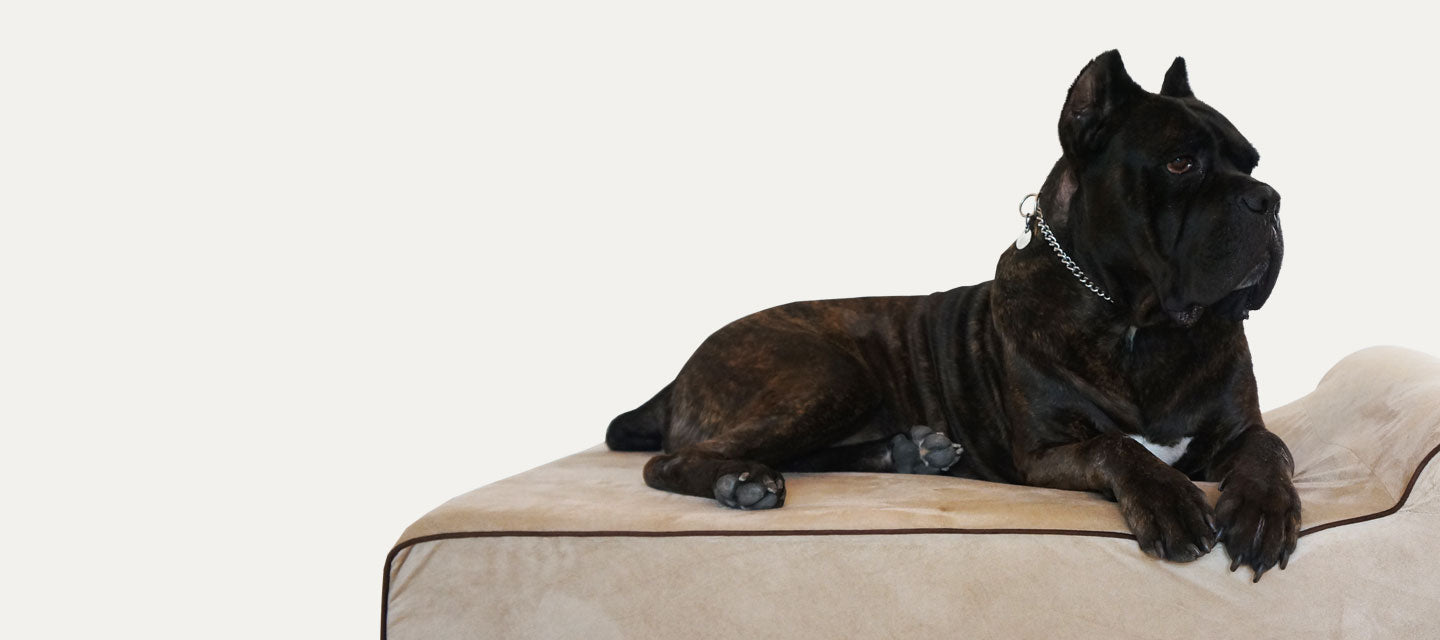 Dog Bed For Large Breed