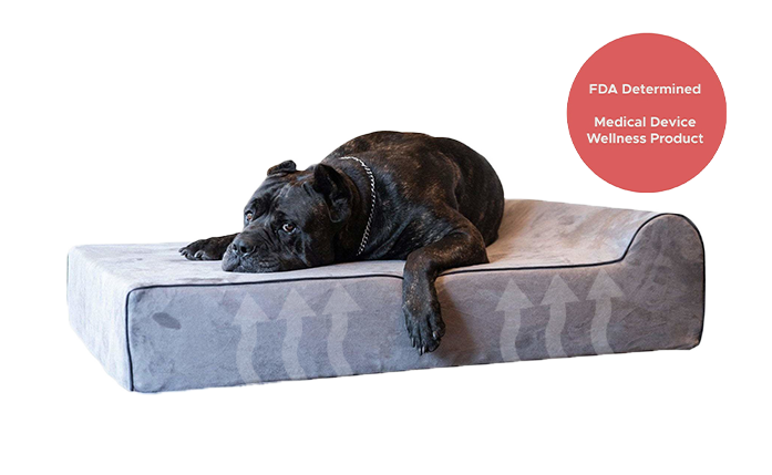 Infrared Dog Bed