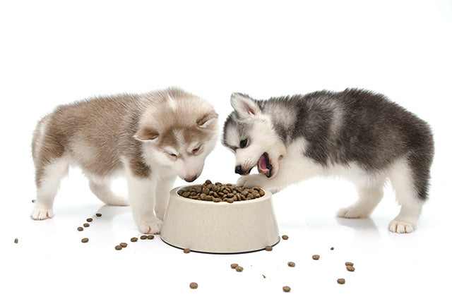 Large Breed Puppy Feeding Tips