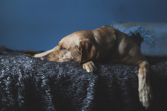 Ways to Change your Dog's Sleeping Habits