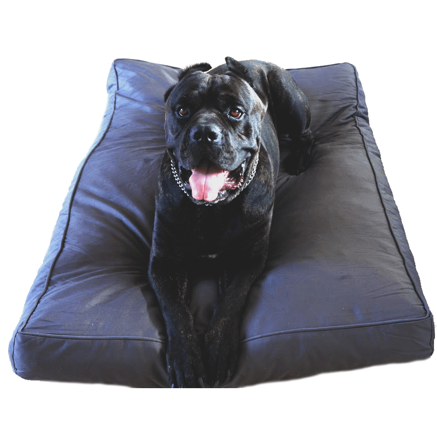 Buy Chew Proof Large Extra Large And Xxl Dog Beds Bullybeds Com