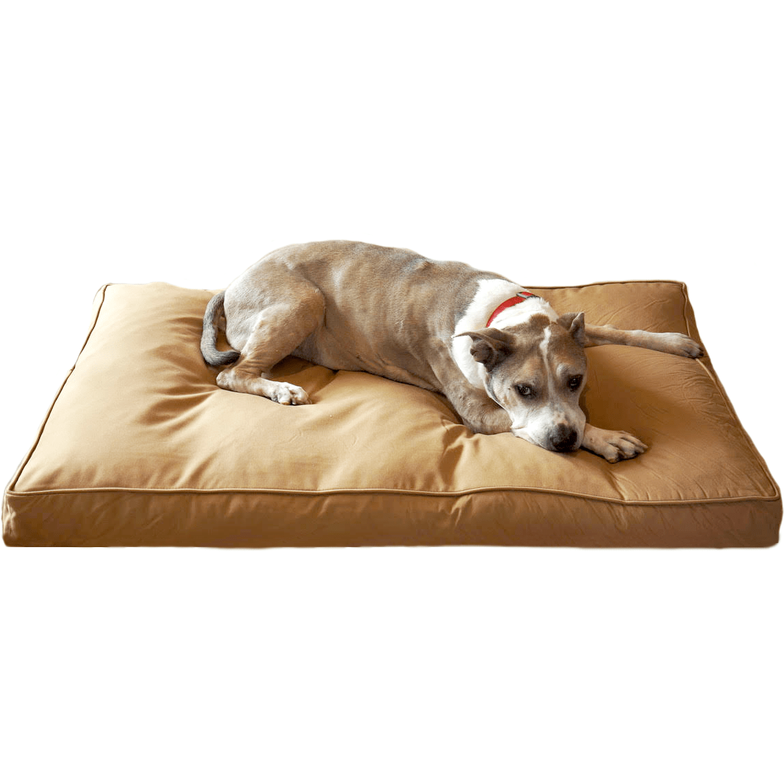 "Chew Resistant Dog Bed With 200 Day Guarantee Bully Bed bullybeds.com Medium $129.99 - 34""x22""x4"" Tan"