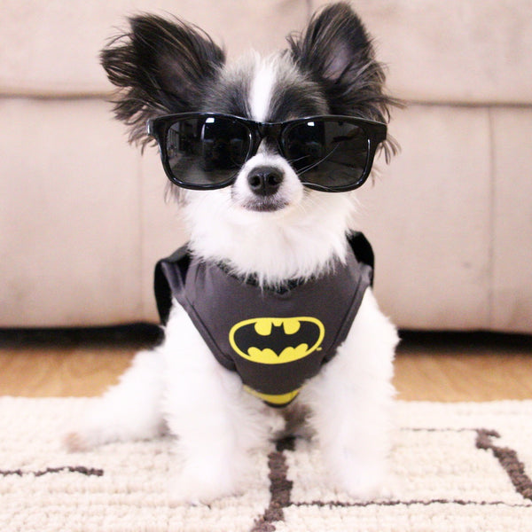 Farfetched Apparel Interviews the Instafamous Dog @ipartywithbrucewayne