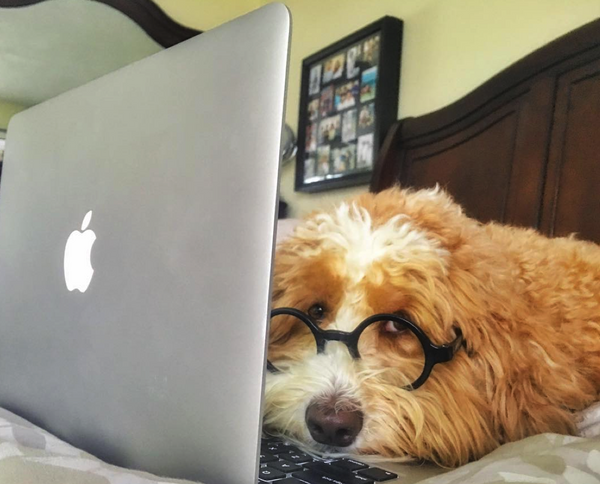 Farfetched Apparel interviews Instagram famous @sawyer_the_doodle!
