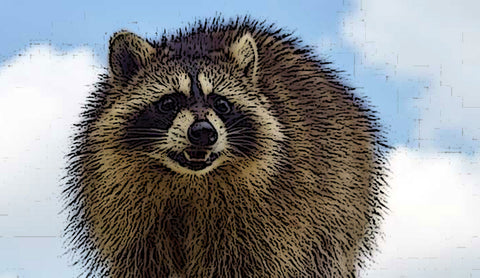 The Trouble With Raccoons