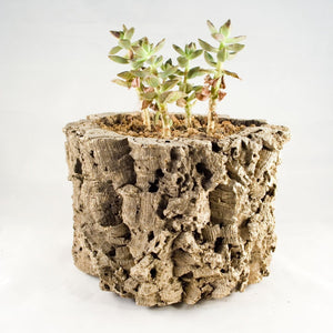 Cork Planter - Naturally Anti-Microbial Hypoallergenic Sustainable Eco-Friendly Cork