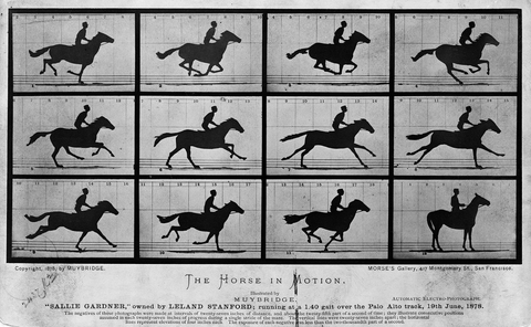 Horse Locomotion: A Drama