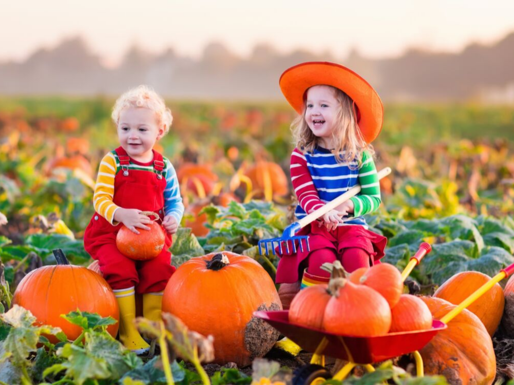 The Best Pumpkin Patches In and Around Minneapolis