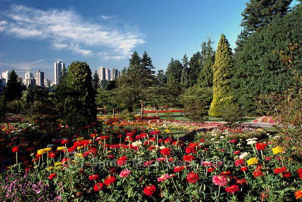 Vancouver one day tour:  Stanley Park