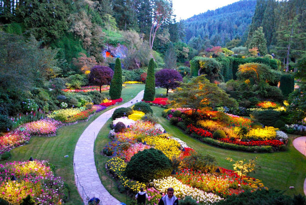 Victoria one day tour: Spend time in the world famous Butchart Gardens, which is now a National Historic Site of Canada (Entrance Fee is included)