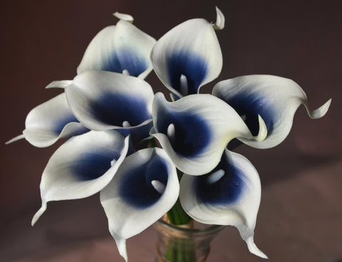 Navy Blue Picasso real touch calla lily
