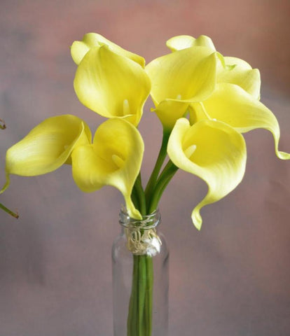 Yellow real touch calla lily