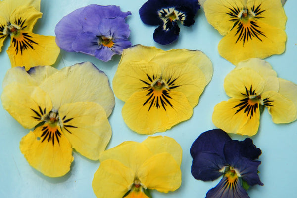 Dried Flowers - SilicaGelly Silica Gel Desiccant Dehumidifier Reduce Moisture Malaysia Singapore