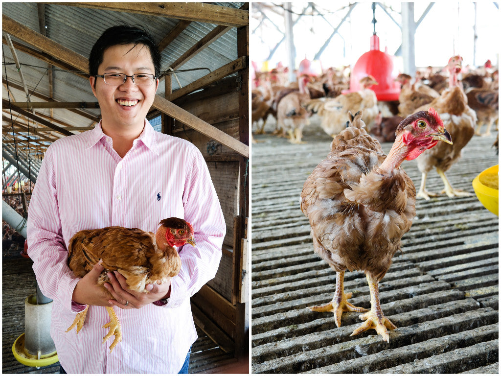 Guide to Buying The Best Chicken in Singapore