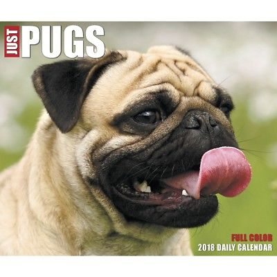 Just Pugs Desk Calendar, Pug by Willow Creek Press Willow Creek Press 1