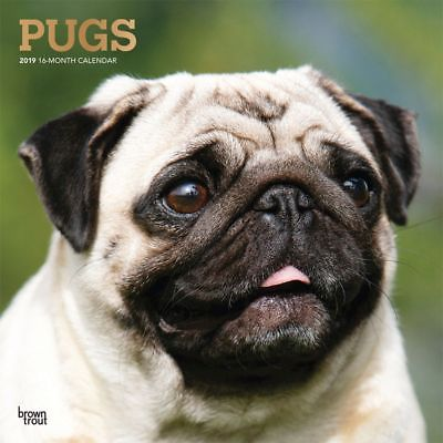 Pugs Wall Calendar, Pug by BrownTrout BrownTrout 1
