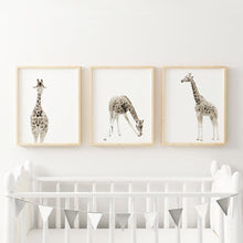 Load image into Gallery viewer, Giraffe set of three wall prints - Wall Prints