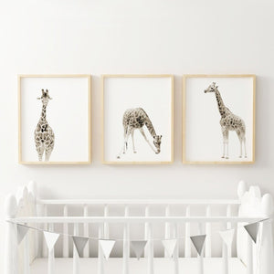 Giraffe set of three wall prints - Wall Prints