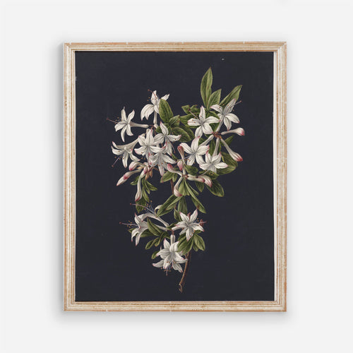 Flowers Vintage Wall Art - Printed and Shipped Reproduction - Dark Moody Modern Bedroom Floral Wall Prints