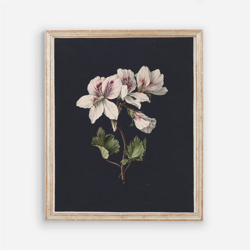 Vintage Floral Wall Art - Dark Modern Bedroom Flowers Wall Prints - Printed and Shipped Reproduction -