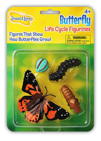 Butterfly Life-Cycle