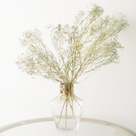 Eternity Green Gypsophila
