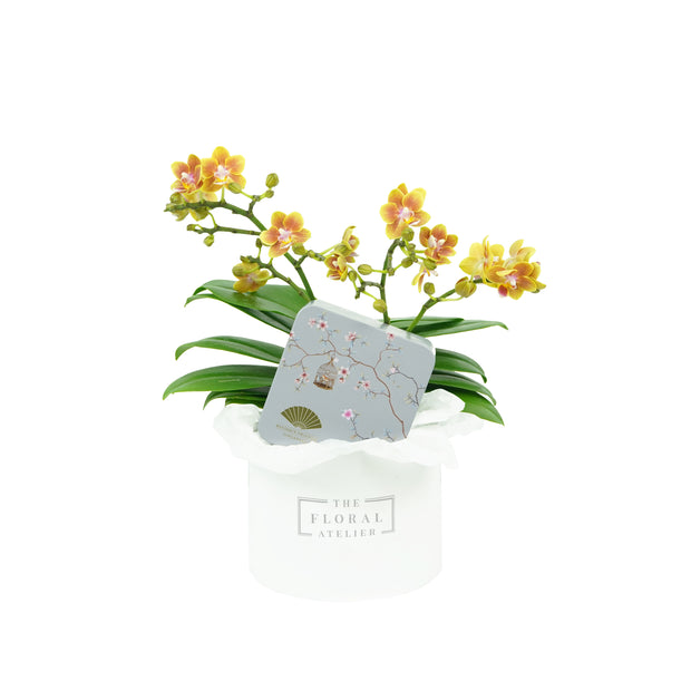 Oriental Petite Bloom Box 秋月春花