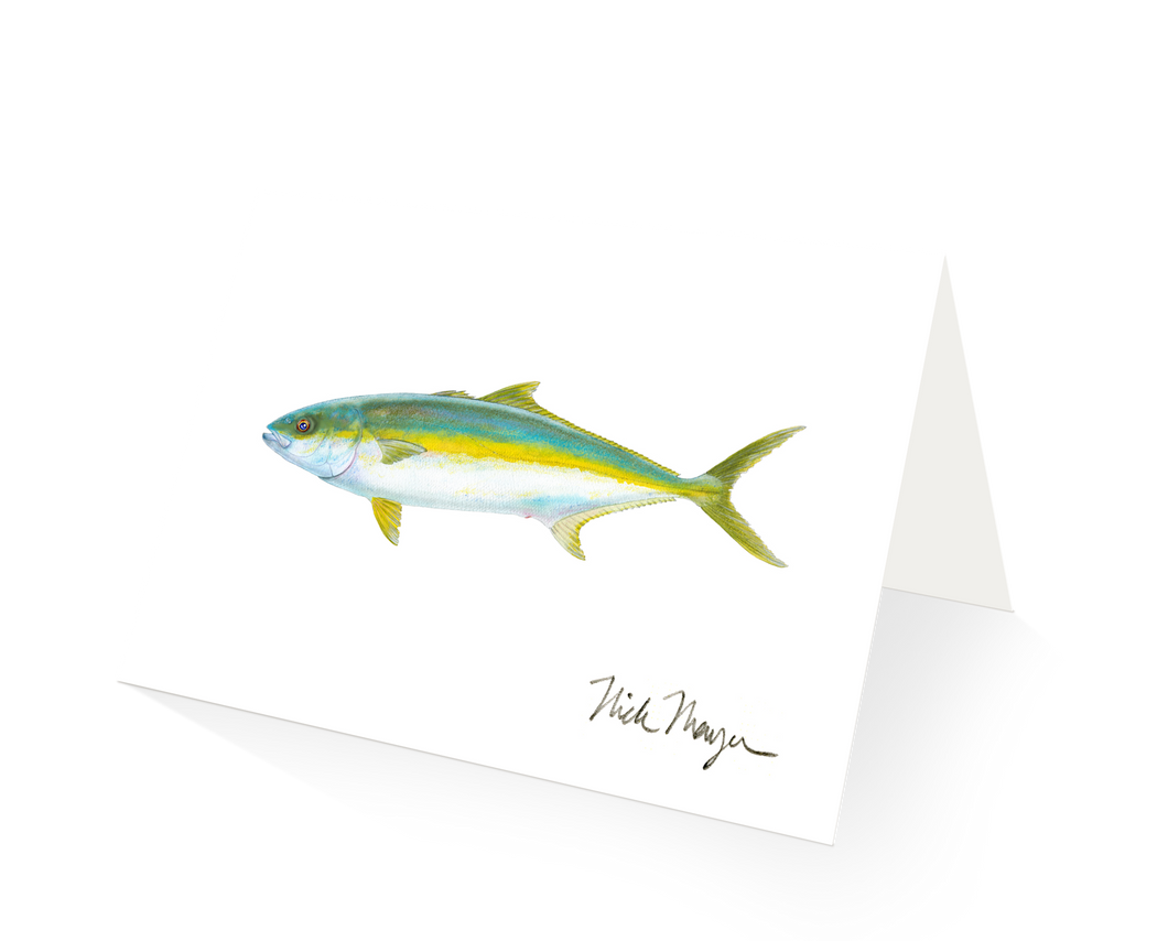 California Yellowtail 1
