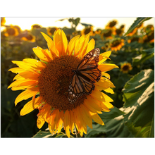 Load image into Gallery viewer, Kansas Sunflowers with Butterfly Fine Art Print