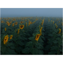 Load image into Gallery viewer, Hazy Field Fine Art Print