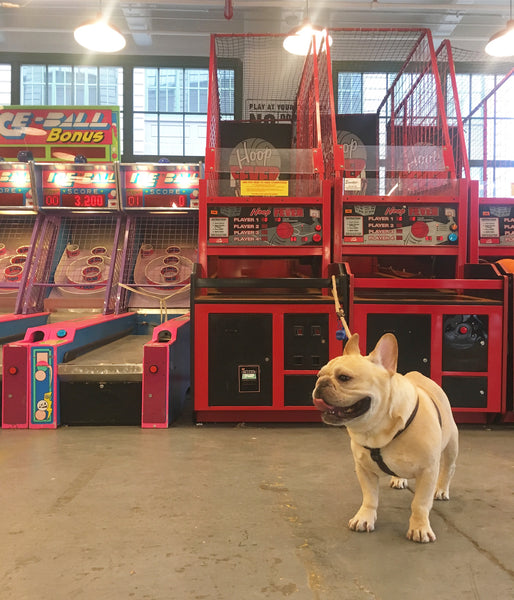 French Bulldog Love Industry City
