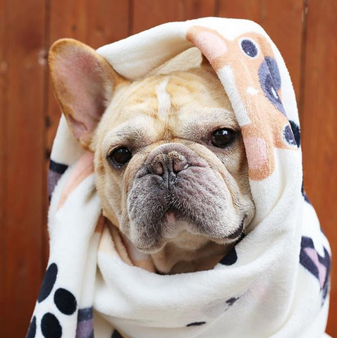 French Bulldog Love Fleece Blankets