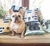 Striped French Bulldog Pillow / Grey on Teal - French Bulldog Love - 3